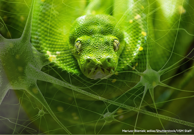 Python, Fully Embraced by Visual Studio, Is on the Rise
