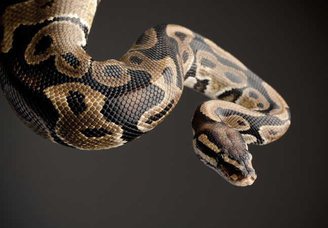 Use Python with Your Neural Networks -- Visual Studio Magazine