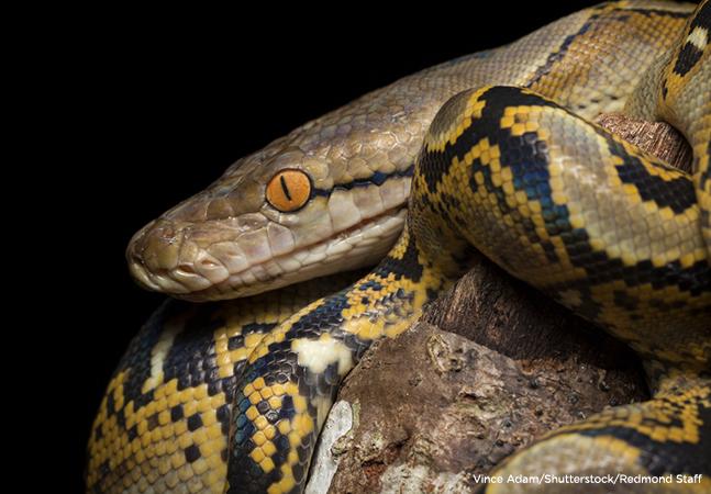 Neural Network Back-Propagation Using Python -- Visual Studio Magazine